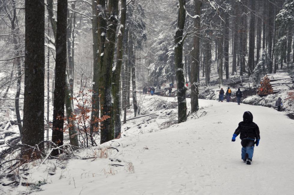 Blogger für den Tourismus in Hessen_Fuchstanz im Winter